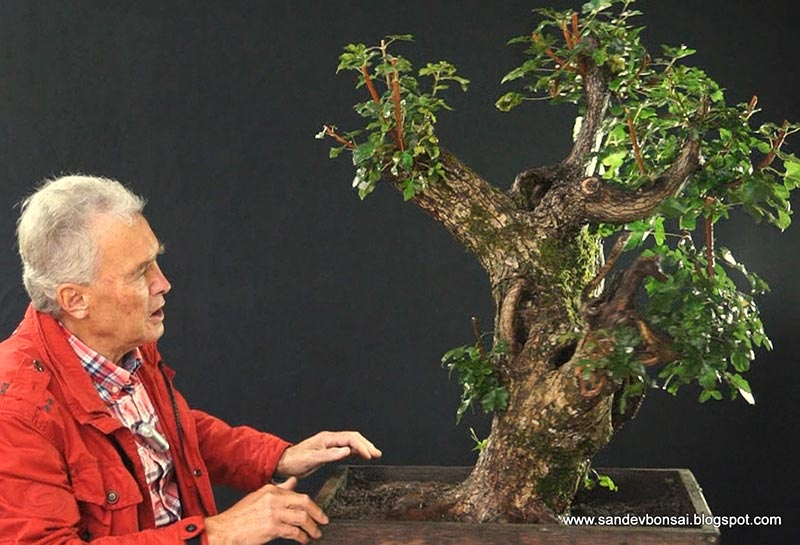 The Fairy Tale Bonsai Style Bild_316