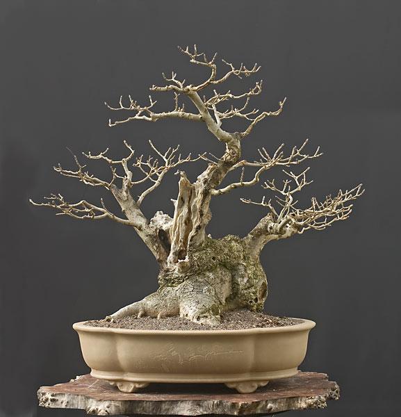 The Fairy Tale Bonsai Style Bild_318