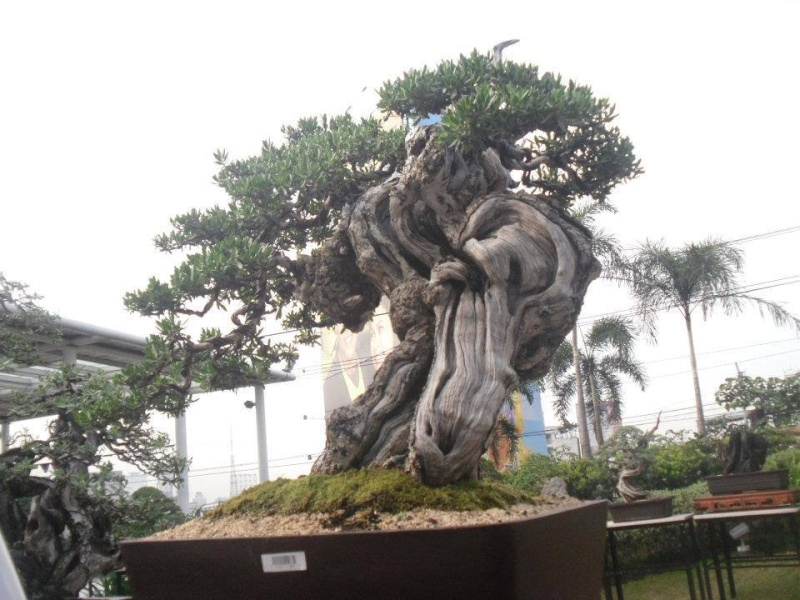 The Fairy Tale Bonsai Style Bild_321