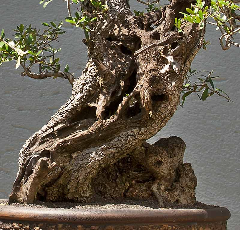 The Fairy Tale Bonsai Style Bild_411