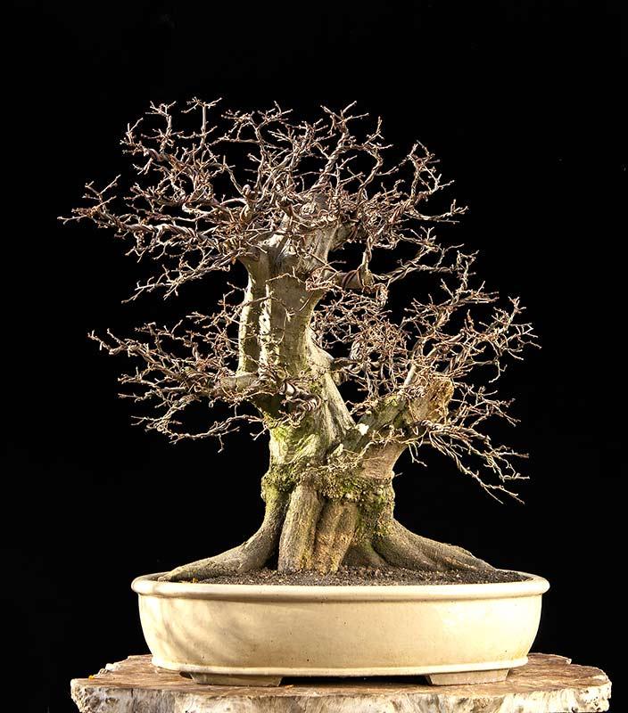 The Fairy Tale Bonsai Style Bild_414