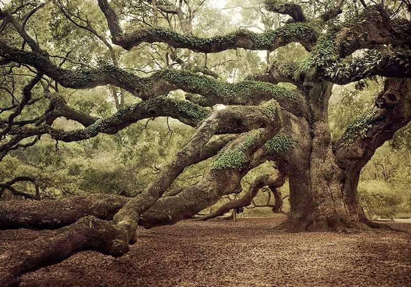 The Fairy Tale Bonsai Style Bild_910