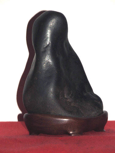North American Black Seated12
