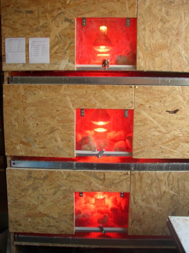 fabrication éleveuse a poussins Poussi16