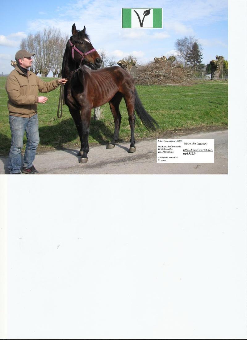 Aidez nos chevaux sauvés de la boucherie: votez pour l'association Infor-végétarisme  à un concours Une_gr10