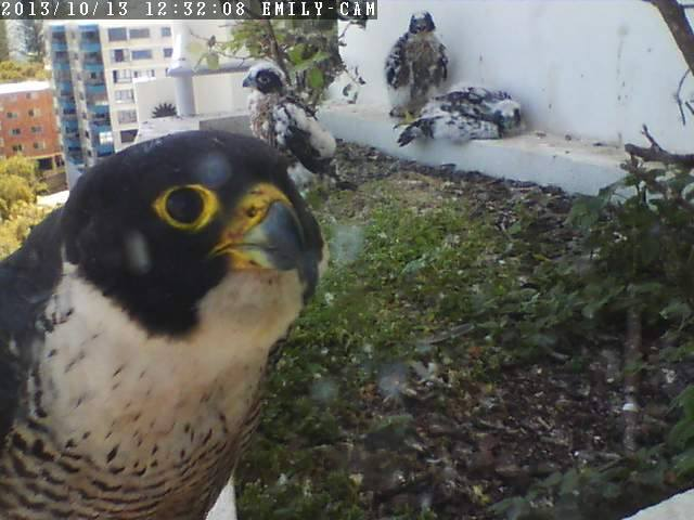 Robyn Hills Falcons 2013 tot en met 2018 - Pagina 2 13751610
