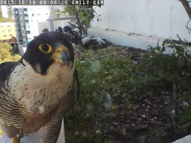 Robyn Hills Falcons 2013 tot en met 2018 - Pagina 2 13774110