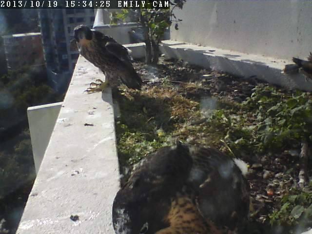 Robyn Hills Falcons 2013 tot en met 2018 - Pagina 2 13774410