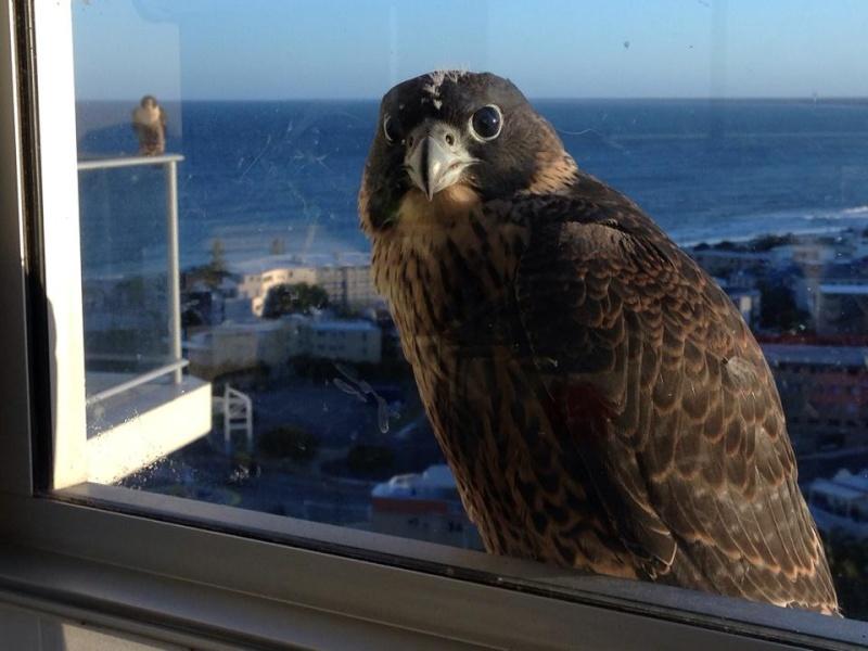 Robyn Hills Falcons 2013 tot en met 2018 - Pagina 2 13833710