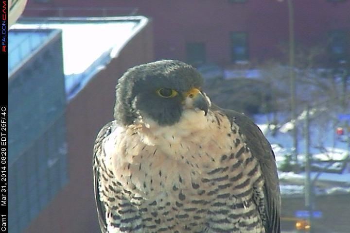 Rochester, NY: Beauty & Dot.Ca 2014 - Pagina 4 Camera72