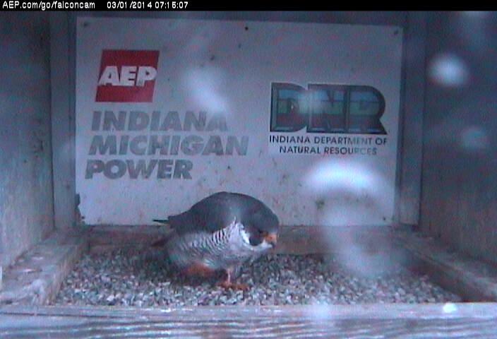 Indiana/Fort Wayne,I-AEP: Jamie(92/D) en Moxie(99/E) 2014 Falco141