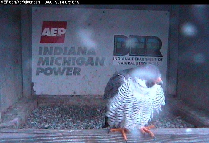 Indiana/Fort Wayne,I-AEP: Jamie(92/D) en Moxie(99/E) 2014 Falco142