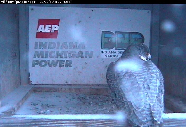 Indiana/Fort Wayne,I-AEP: Jamie(92/D) en Moxie(99/E) 2014 Falco146