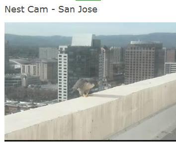 San José (Clara & Fernando (FC), San Fransisco (Dan and Cher) : Californië 2014 - Pagina 2 San_jo10