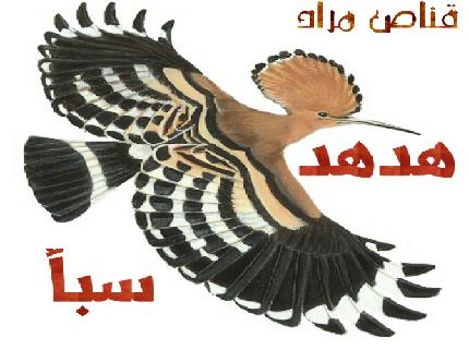Hodhod Saba News 13973810