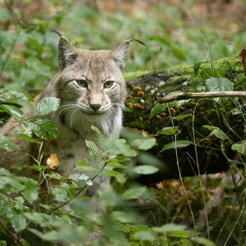 Parc de Ste Croix - 05/10/13 - photos animaux du parc - Page 2 _dsc7310