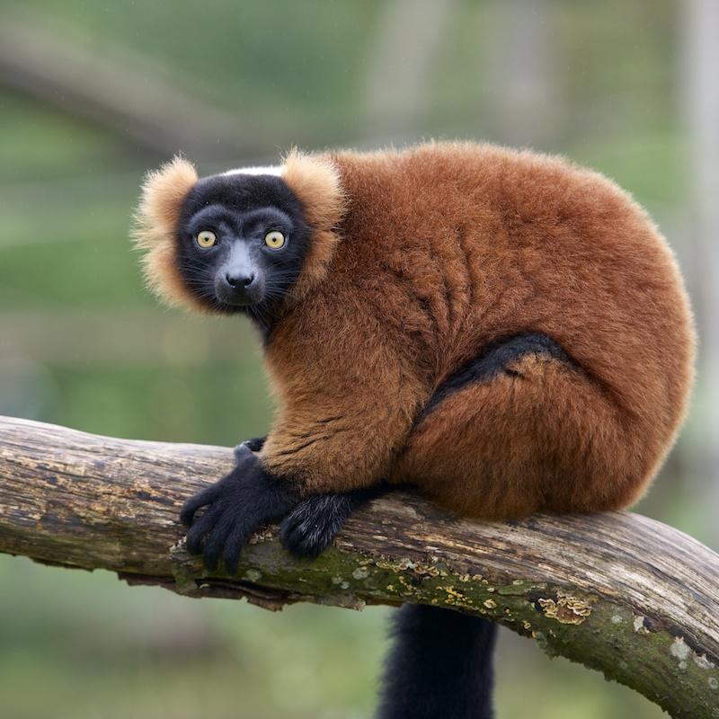 Parc de Ste Croix - 05/10/13 - photos animaux du parc _dsc7510