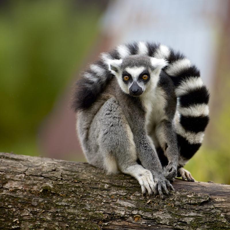 Parc de Ste Croix - 05/10/13 - photos animaux du parc _dsc7511