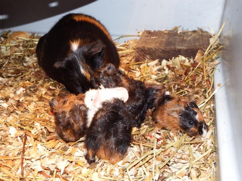 bébés angora sont nées - Page 4 Dscf0536