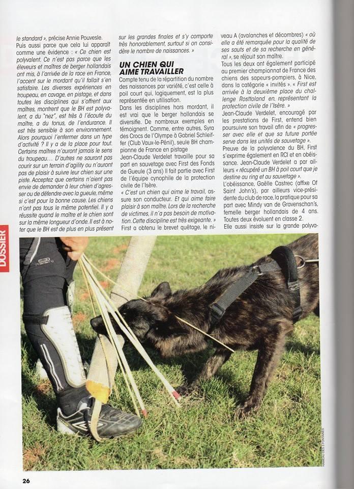 Des chiots Berger Hollandais Poils Longs Ardechois à venir ? - Page 32 13959310
