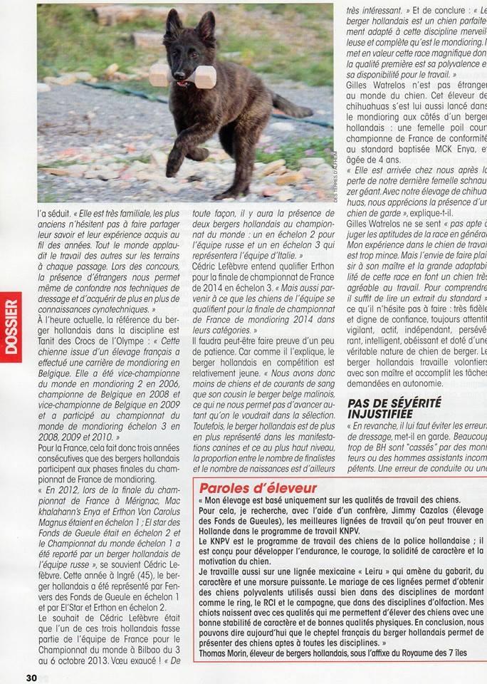 Des chiots Berger Hollandais Poils Longs Ardechois à venir ? - Page 32 99829610