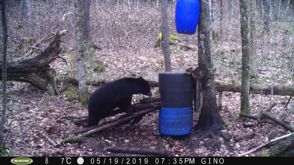OUVERTURE CHASSE a L'OURS 0061010