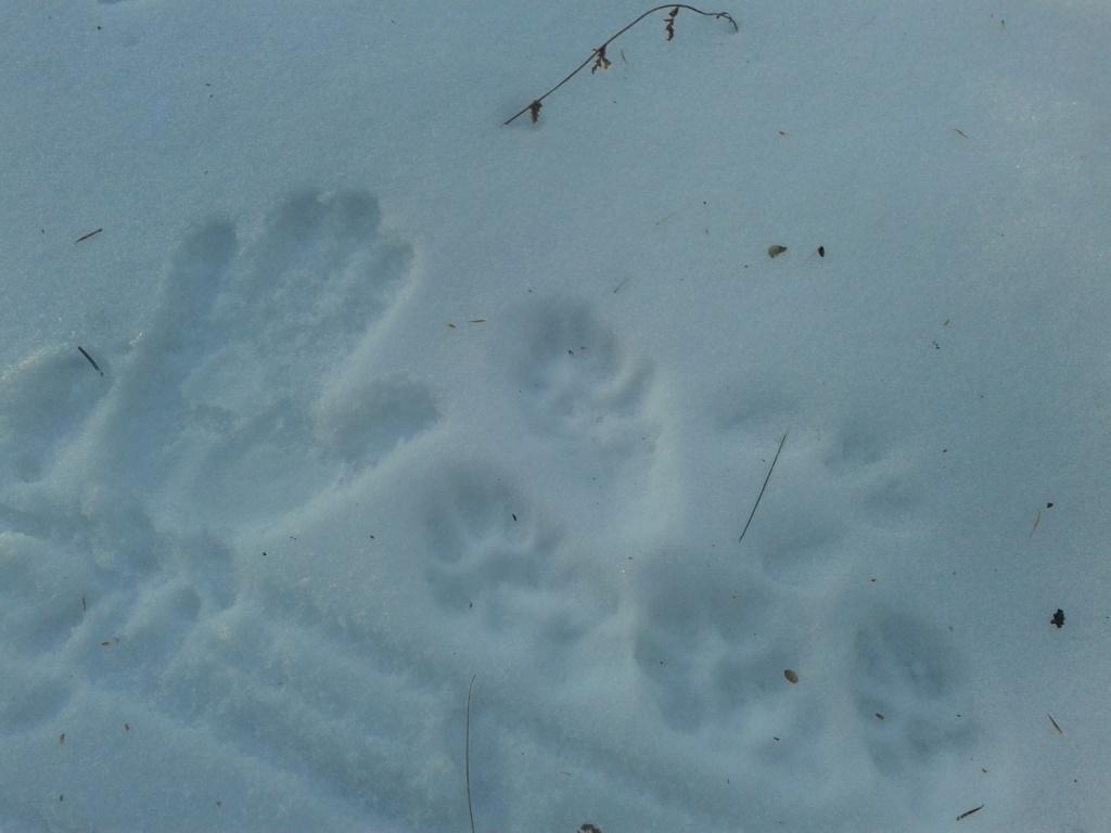 trappe coyote 03610