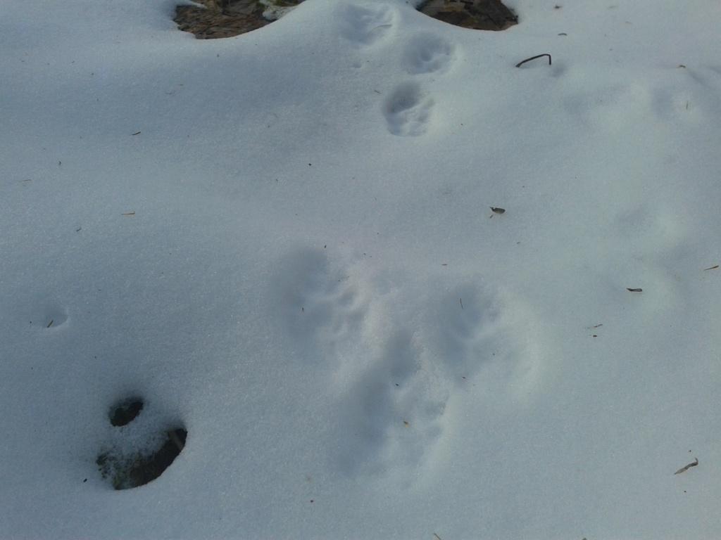 trappe coyote 03710