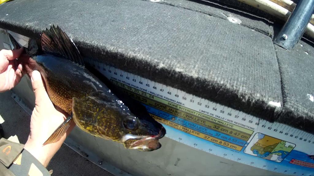 Bon trip de pêche  cette année au lac chibougamau !  Vlcsna17