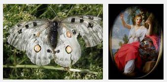 Juxtapositions oulipiennes d'images - Poésie des contrastes Robe_d10