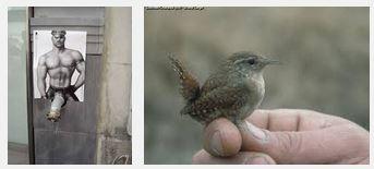 Juxtapositions oulipiennes d'images - Poésie des contrastes Son_pt10