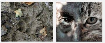 Juxtapositions oulipiennes d'images - Poésie des contrastes Traces10