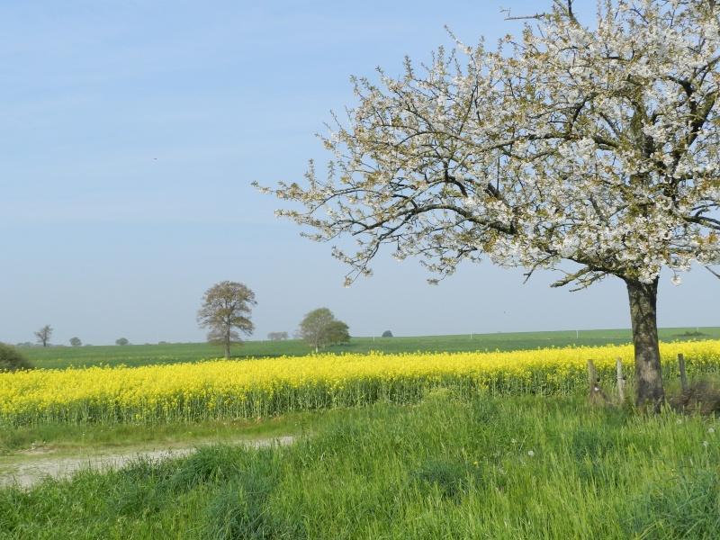 printemps 2014 sous l'égide de la couleur jaune Vauva136