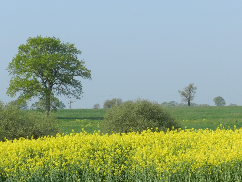 printemps 2014 sous l'égide de la couleur jaune Vauva137