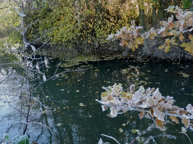 Décembre 2013 - gelée blanche sur la rivière Vauvar36