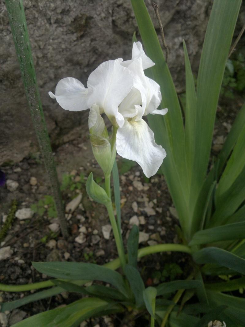 un nouveau blanc  2014-015