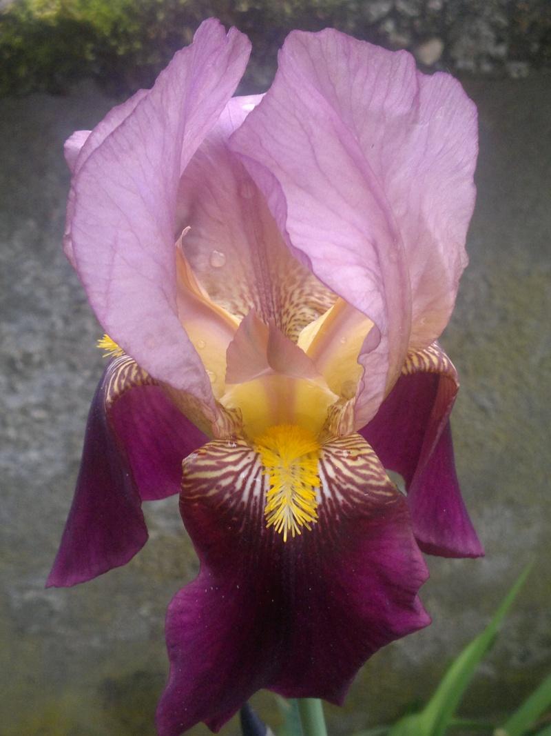 """Recherche iris """"historiques"""" 2014-026"""