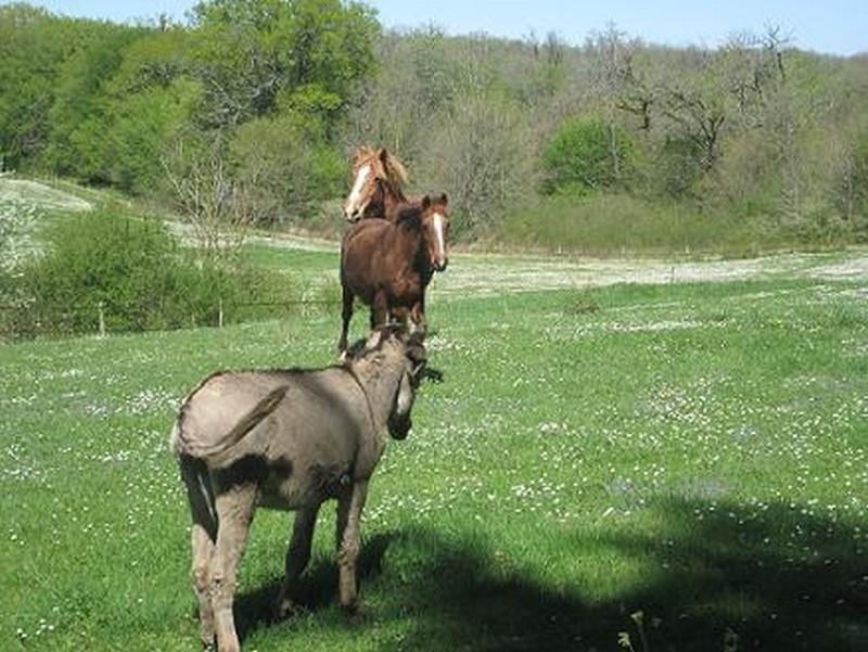 BOURIQUET - ONC âne né en 2009 - adopté en août 2017 par Marie Bouriq11