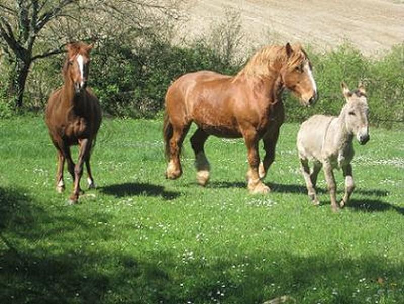 BOURIQUET - ONC âne né en 2009 - adopté en août 2017 par Marie Bouriq13