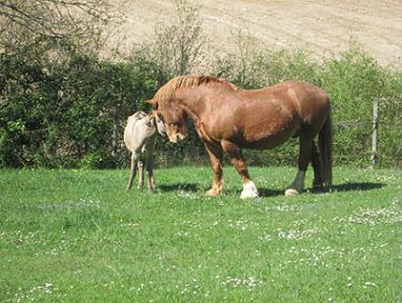 BOURIQUET - ONC âne né en 2009 - adopté en août 2017 par Marie Bouriq14