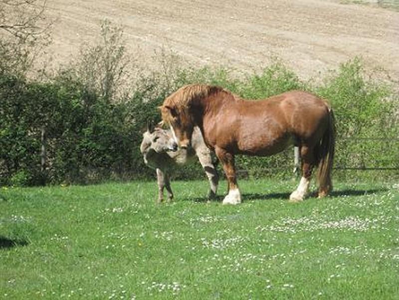 BOURIQUET - ONC âne né en 2009 - adopté en août 2017 par Marie Bouriq15