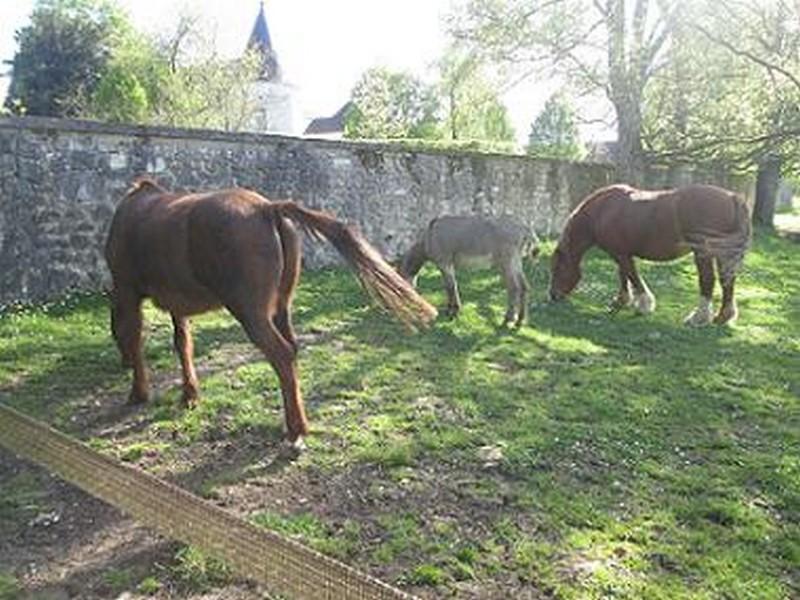 BOURIQUET - ONC âne né en 2009 - adopté en août 2017 par Marie Bouriq16