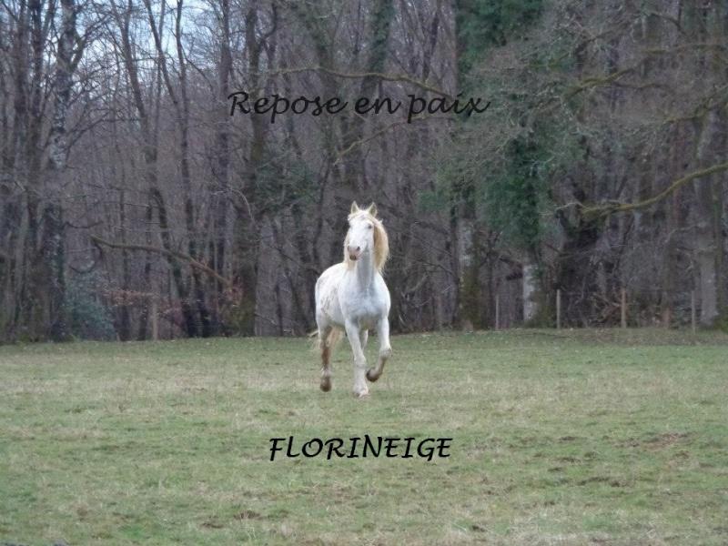 FLORINEIGE - ONC Selle née en 1993 - Protégée GPLV - Page 4 Florii10