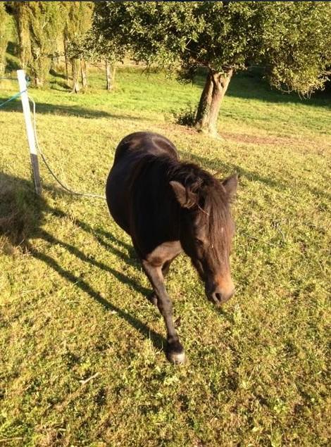 PRUNELLE - ONC poney typée shetland présumée née en 2000 - adoptée en août 2013 par Céline - Page 2 Prunel19