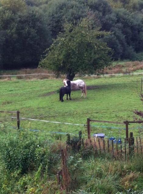 PRUNELLE - ONC poney typée shetland présumée née en 2000 - adoptée en août 2013 par Céline - Page 2 Prunel20