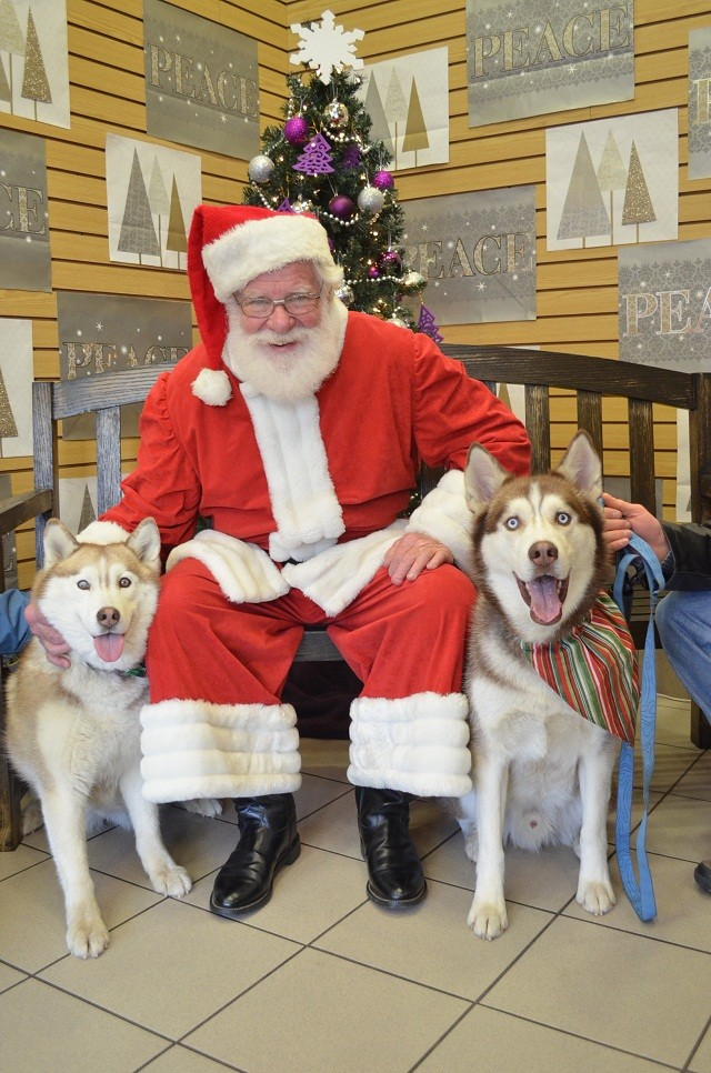HOTM - December : Holiday Huskies Chat Best10