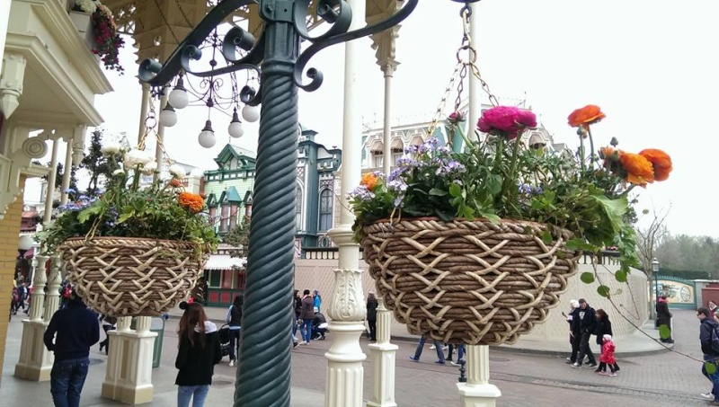 Festival du printemps 2014 (Disneyland Park) - Page 6 53224410