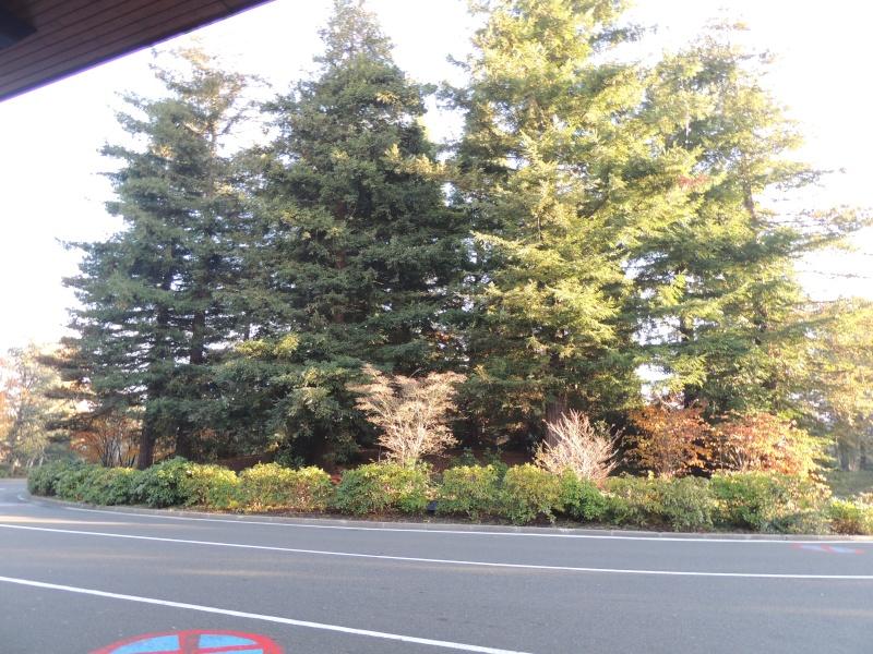 Séjour au Sequoia Lodge - Du lundi 9 au Mercredi 11 décembre 2O13 Dscn5019