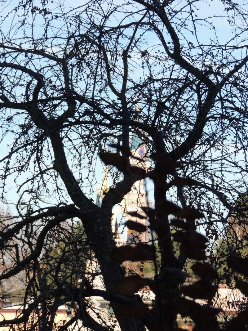 Séjour au Sequoia Lodge - Du lundi 9 au Mercredi 11 décembre 2O13 Dscn5114