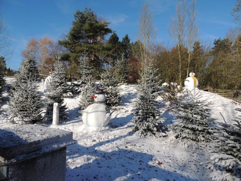 Séjour au Sequoia Lodge - Du lundi 9 au Mercredi 11 décembre 2O13 Dscn5129